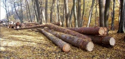 Ministerul Mediului a sesizat Parchetul instanţei supreme în cazul Holzindustrie Schweighofer