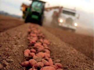 Agricultura a adus în economie 17 mld. euro, al patrulea cel mai mare rezultat din istorie
