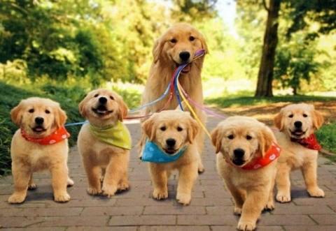 Iubitorii de câini sunt așteptați la Napoca Dog Show la BT Arena din Cluj-Napoca