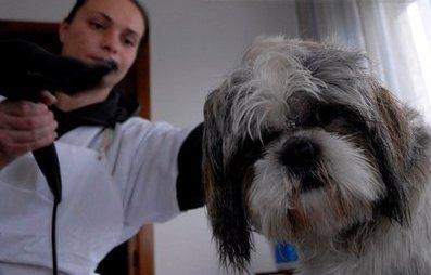 Mini-protest fata de eutanasierea cainilor in Romania, in timpul vizitei lui Iohannis la Salzburg