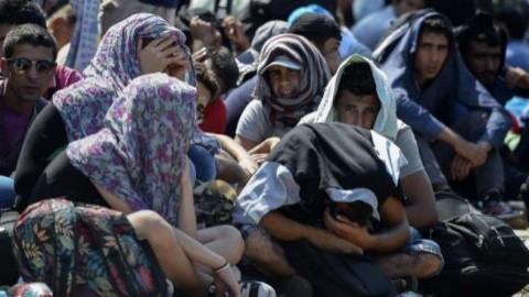 ministrul-austriac-de-externe-criza-imigrantilor--un-dezastru-umanitar-11971