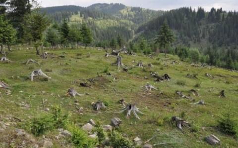 codul-silvic-impune-romsilva-ca-suprafa-a-de-padure-gestionata-sa-nu-scada-sub-3-milioane-de-hectare-10930