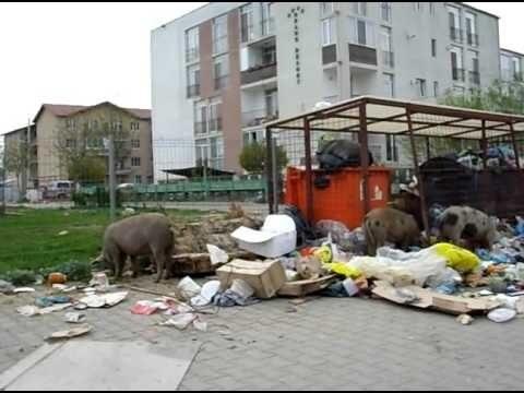 Disperați că sunt înecați în gunoaie, floreștenii și-au făcut olimpiadă de dus deșeuri la Primărie