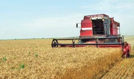 România redevine grânarul Europei. Exporturile noastre de cereale sunt cele mai mari din UE