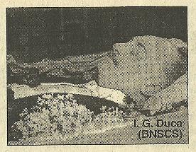 moartea-lui-duca