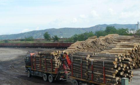 Brico Depot România a închis colaborarea cu Holzindustrie Schweighofer