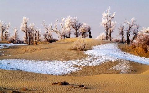 Poemul Zilei: Poeți de zăpadă