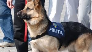 Jandarmii vor folosi la Untold și la Electric Castle Cluj câini antrenați pentru depistarea drogurilor și a explozibililor