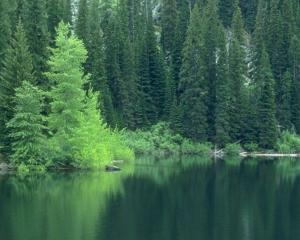 Pădurile din România au fost incluse în Patrimoniul Mondial Natural al UNESCO