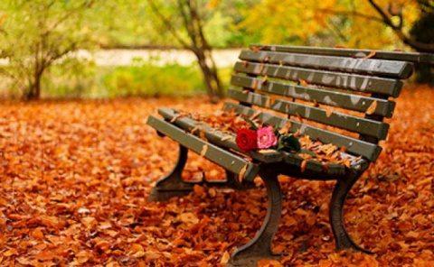 Poemul Zilei: Bluesul frunzelor toamna