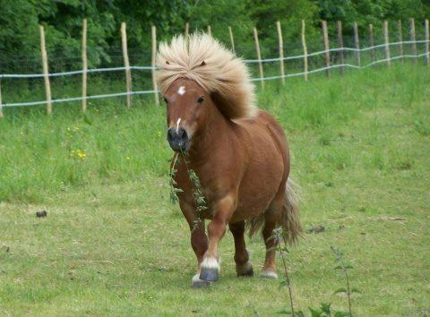 Sirian surprins în timp ce agresa sexual un ponei la o grădină zoologică din Germania
