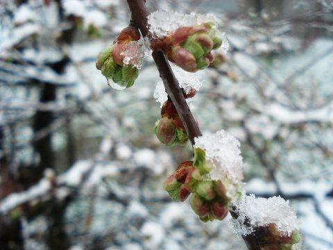 Poemul Zilei: Surâsul zăpezii
