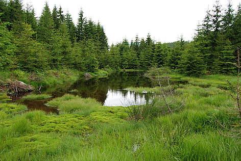 Un paradox: în ciuda defrişărilor, pădurile României au crescut!