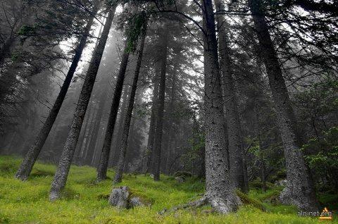 Poemul Zilei: Călător prin pădurea nebună
