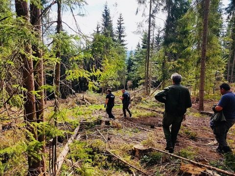 După ce s-au furat sute de metri cubi de pădure, polițiștii au găsit la Beliș doar câteva cioate de arbori nemarcați