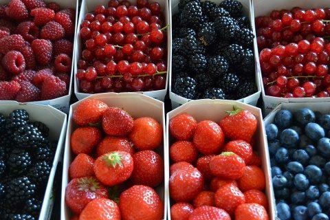 """Prima Cooperativa Agricola de fructe de padure din judetul Cluj : """"Arome Transilvane"""""""