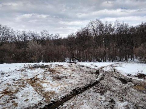Pădurea Hoia-Baciu devastată de tăieri de copaci