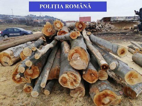 Amenzi de 34.000 lei pentru firmele din județ care exploatează material lemnos
