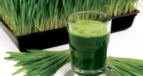 """""""Sângele verde"""": sucul de iarbă de grâu îți reface sănătatea"""