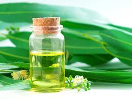 Uleiul de eucalipt vindecă boli respiratorii