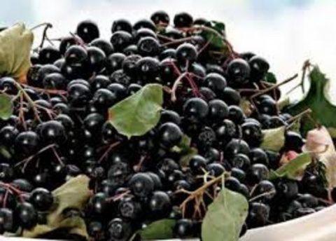 Fructele de aronia ajută intelectul