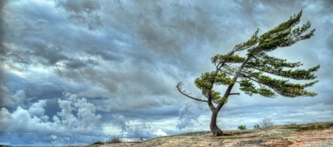 Poemul Zilei: Aripi de stepă