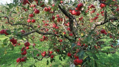 Poemul Zilei: Mărul