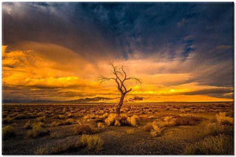 Poemul Zilei: Copacul