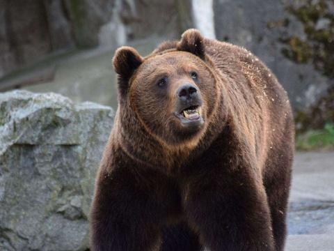 Ciobani uciși de urs în Harghita