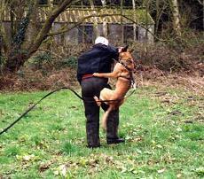 Câine polițist anti-efracție abuzat de un român la St. Pölten. Românul a primit 10 luni de închisoare