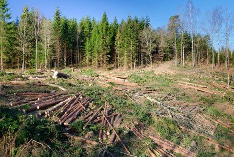 Norvegia, prima țară europeană care interzice tăierea copacilor și pădurilor