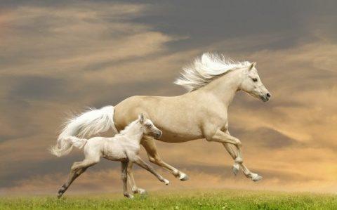 Poemul Zilei: Aleargă caii toamna