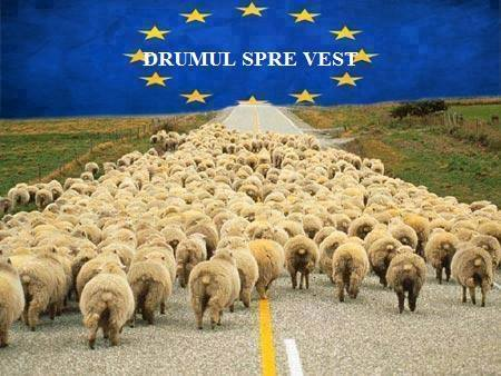 Alegerile s-au încheiat, fondul nevoilor României nu s-a atins