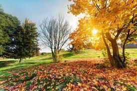 Poemul Zilei: Iarbă de noiembrie