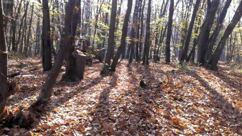 Activități educativ-recreative pentru elevii clujeni în pădurea-parc Făget în cadrul proiectului european URBforDAN
