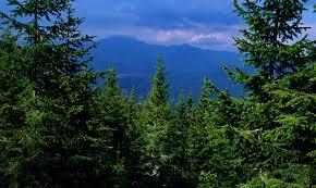 Pădurar, tatăl a trei copii, asasinat în stil mafiot într-o pădure din Maramureş