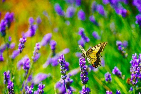 Poemul Zilei: Fluturele