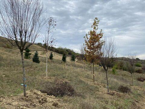Pădurea clujenilor prinde contur