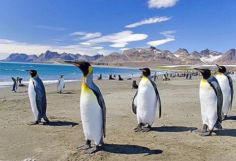 Argentina pretinde din nou Insulele Malvine