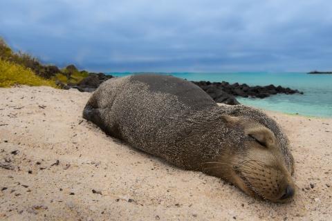 Proiect al USAMV Cluj-Napoca în Arhipeleagul Galapagos: riscul de transmitere a unor boli parazitare la leii de mare